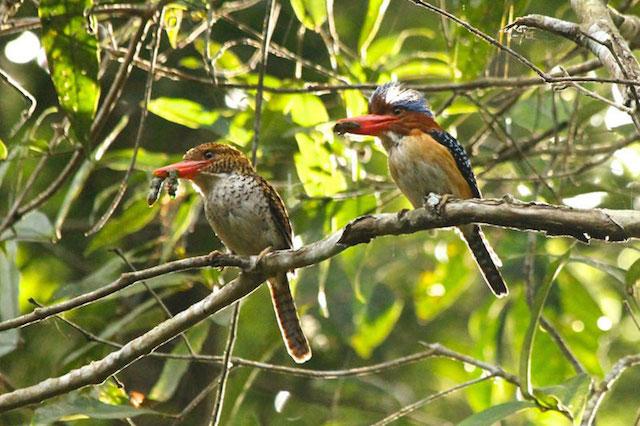 Bird watching Thailand